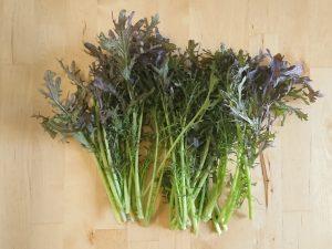 から し 菜 株式会社諏訪菜 植物工場の提案から、運営のコンサルティングまで。